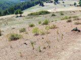 albayrak dan gördes de 50.dönüm teminatlık arazi 77.000 tl